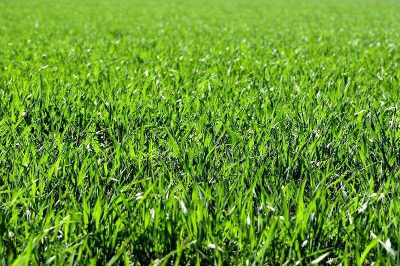 Gartenbau Mit Unseren Tipps Zu Einem Schönen Rasen Wwwbauwohnweltat