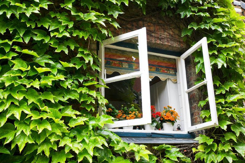 Obscure Glass Windows Opens Out : Begrünte fassaden was sie wissen sollten