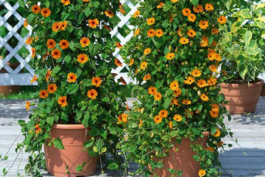 Pflegeleichten Garten Anlegen Und Genießen : Eine Hochterrasse anlegen und den freien Blick genießen  www
